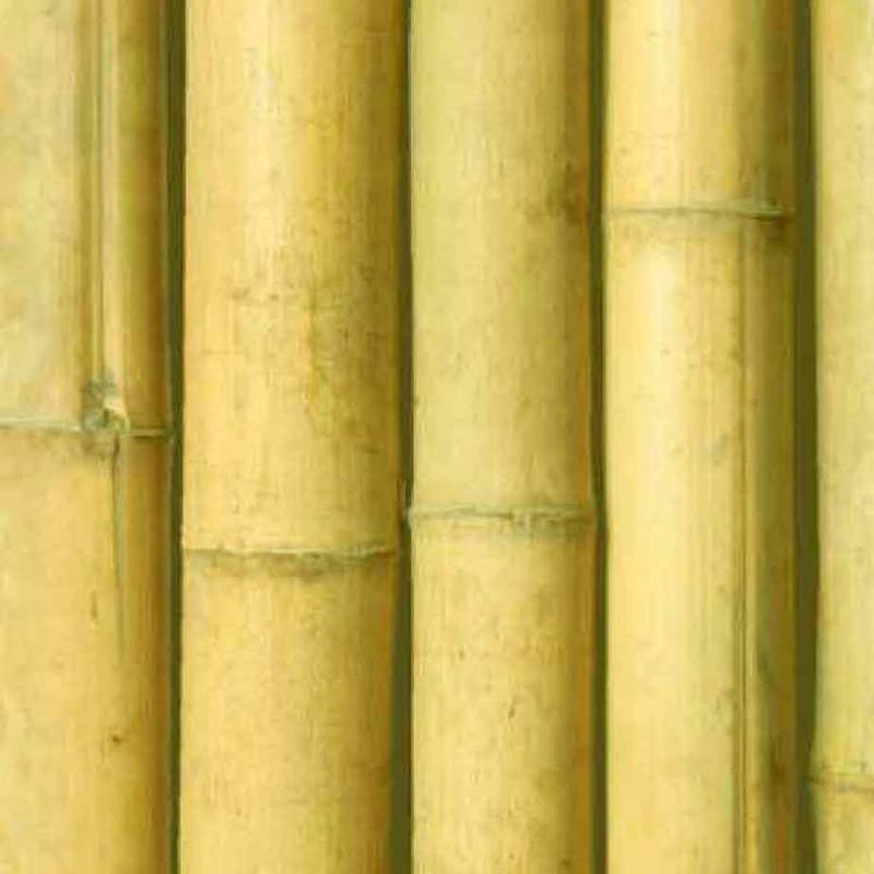 Caña Bambú Comun Decoración Interior Barnizada Transparente Para Interior Se Trata De Un Bambú Ligeramente Cónico Que Suele Usarse Para Decoración En Interiores Dbambu
