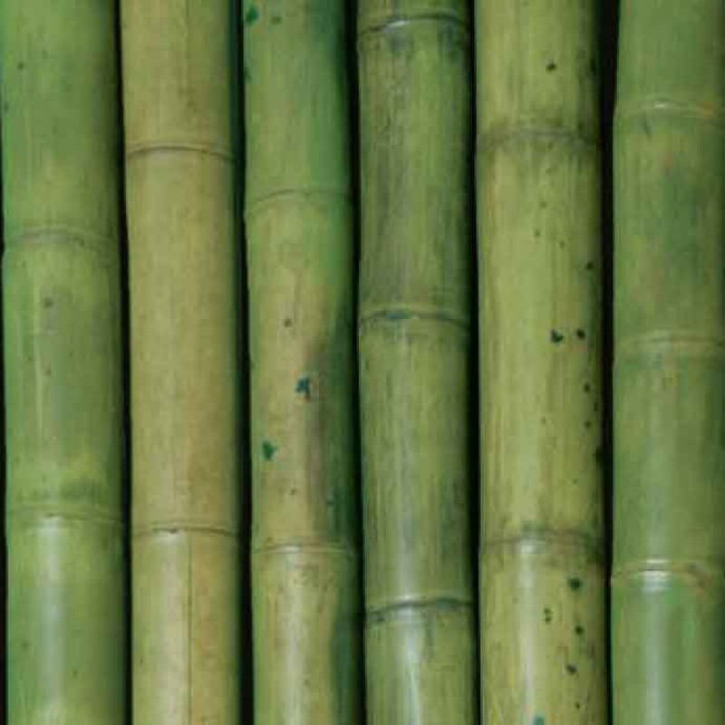Packs Oferta De Cañas Bambú Decoración Verde Dbambu